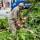Árvores recebem serviços de manutenção preventivos